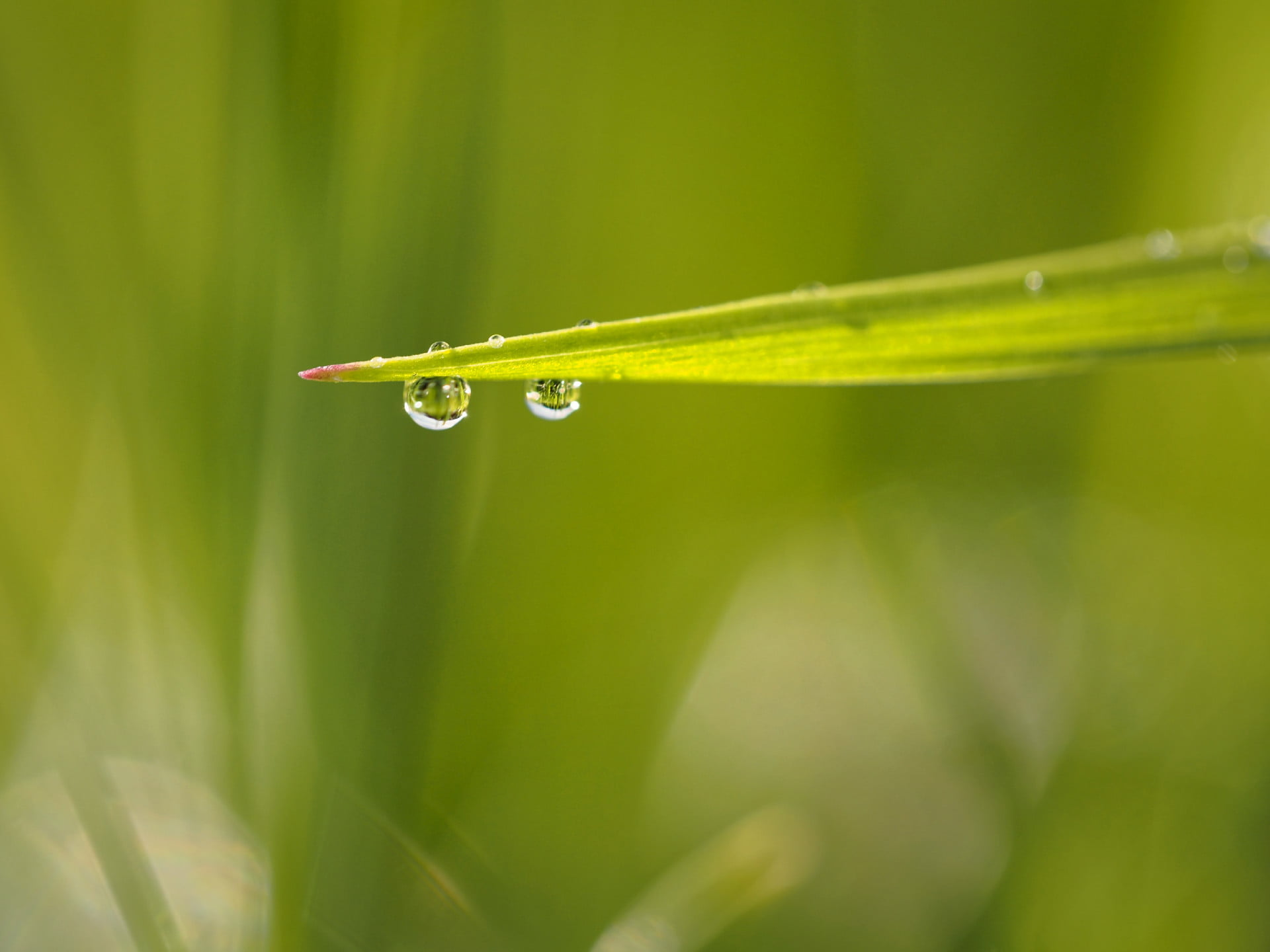 Tips For Water Droplet Photography.